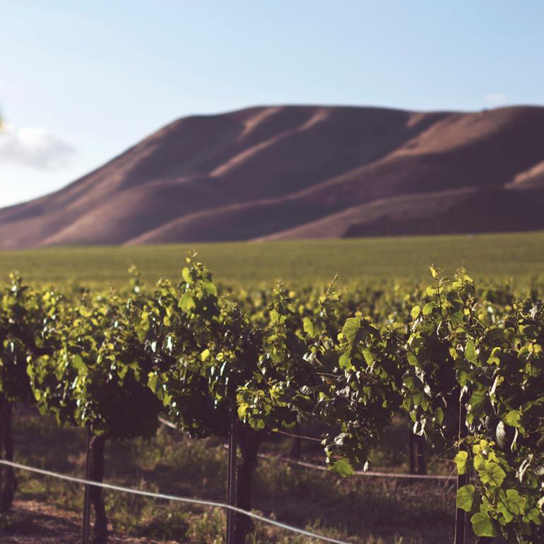 Cours 4 Les secrets du vin