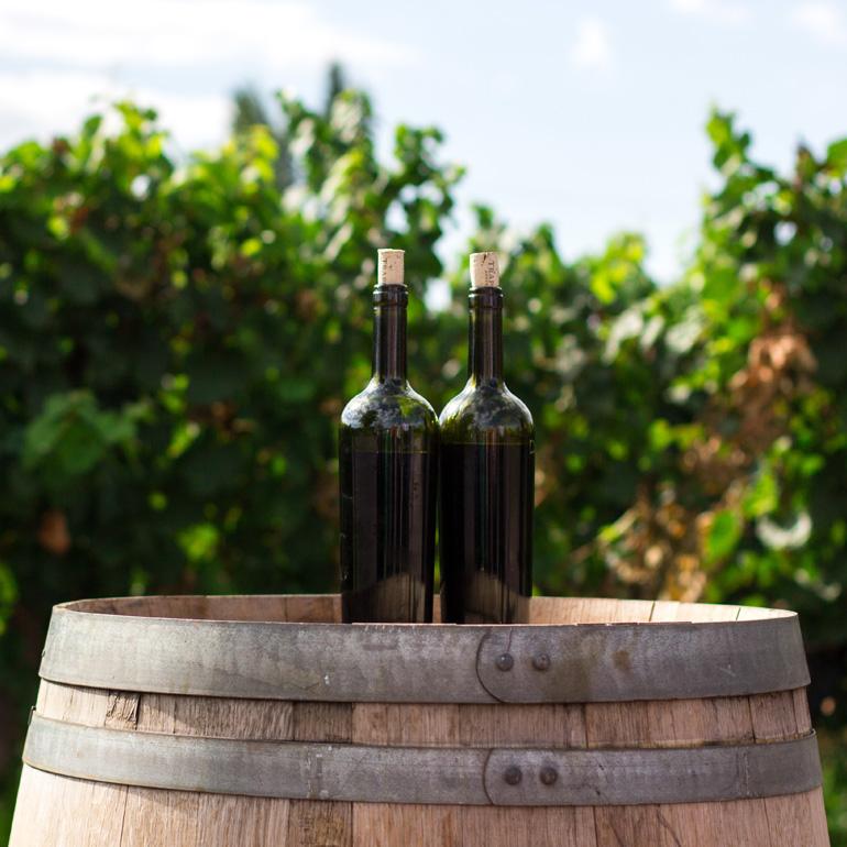 Cours 3 La vinification et l'élevage du vin